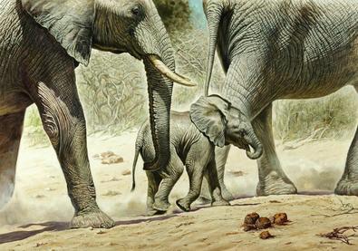 Renato Casaro Go Baby Go (Elefanten)