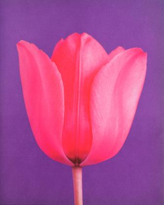 Masao Ota Tulip No. 2