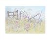 Eileen Crawfurd Wayside Flowers