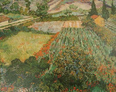 Vincent van Gogh Das Mohnfeld
