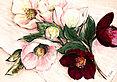 Krobs elisabeth elegant anemones 38311 medium