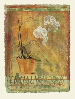 Lucinda Foy Canvas Floral I