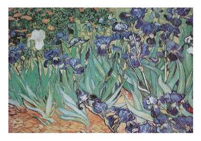 Vincent van Gogh Schwertlilien - Iris Garden