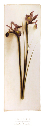 Sondra Wampler Irises