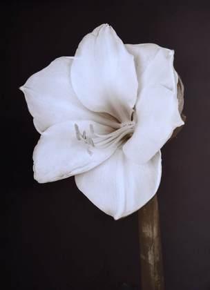 Prades Fabregat Bora Bora Flower II