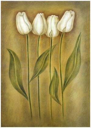 Lewman Zaid Tulips