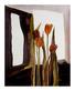Ritter scherer jutta tulpen medium