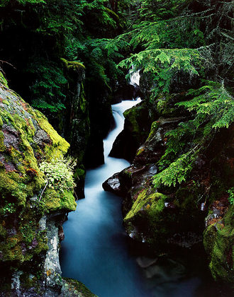 William Neill Avalanche Creek