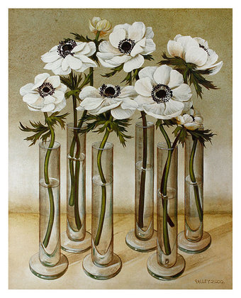Galley White Anemones