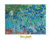 Van gogh vincent iris medium
