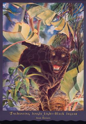 Joan Hansen Black Jaguar