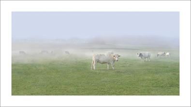 Jacky Lecouturier Les Vaches, 2006