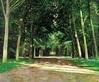 Andreas Scholz Wegkreuzung im Park