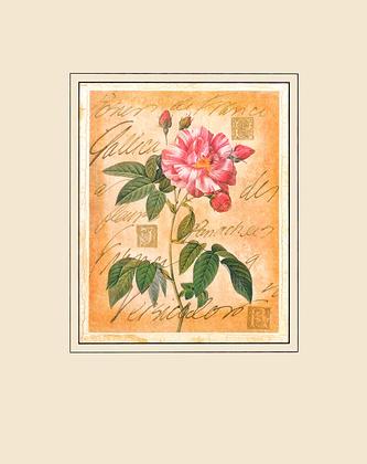 Pierre-Joseph Redoute Rosa Mundi Rose