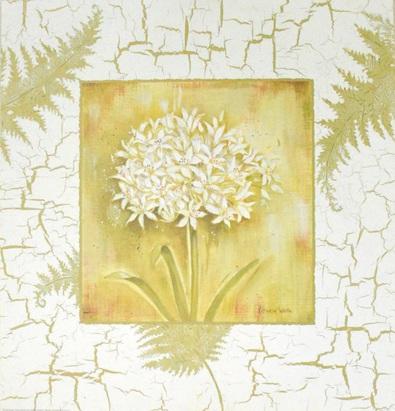 Kathryn White Spring Agapanthus