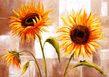 Withaar rian 2er set sunny times sunny day medium