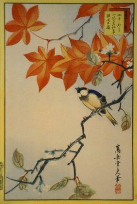 Sugakudo Meise  Ahorn und zweite Kirschbluete