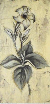 Dougal Botanical Properties I