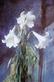 Pedro Cano Lilies