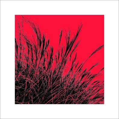 Davide Polla Grass (rot), 2011 II