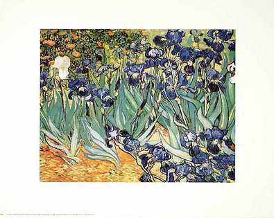Vincent van Gogh Iris Garden