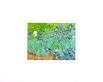 Vincent van Gogh Irises in the Garden
