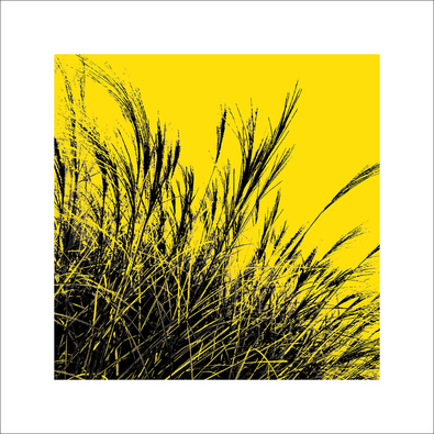 Polla davide grass gelb 2011 ii large