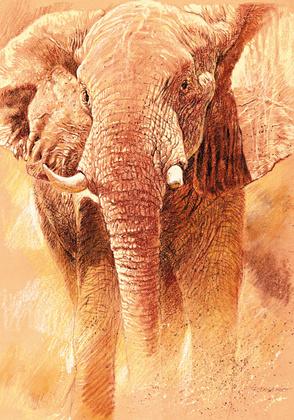 Renato Casaro Elefant Study