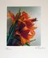 Treichel gerhard feuerlilie klein medium