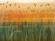Holman robert golden bayou medium