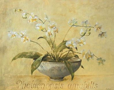 Fabrice de Villeneuve 2er Set 'Phalaenopsis Amabilis' + 'Phalaenopsis Benth'