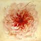 Maura Dutra Rosa No. 2