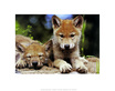Wolfe art spring wolf pups medium