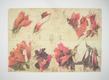 Janssen horst amaryllis details 42517 medium