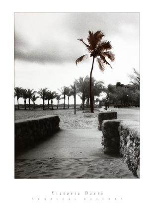 Victoria Davis Tropical Walkway