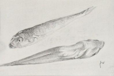 Felix Valloton Zwei Fische