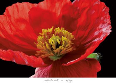 Amalia Elena Veralli Red Poppy