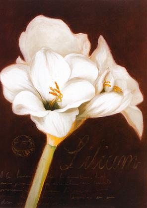 Nicht bekannt 2er Set 'Lilium' + 'Magnolia'