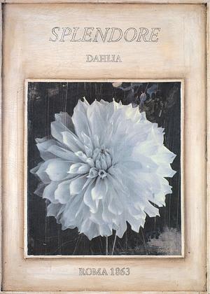 Stuart McQueen Dahlia - Roma 1863
