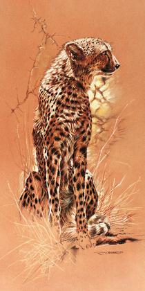 Renato Casaro Cheetah