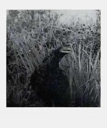Jim Dine Birds (2001)