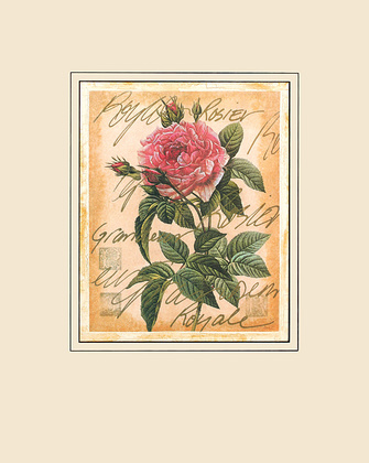 Pierre-Joseph Redoute Great Royal Rose