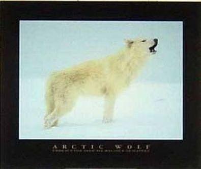 Perry Conway Arktischer Wolf