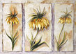 Rian Whithaar Fritillaria Imperialis
