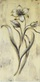 Dougal botanical properties ii medium