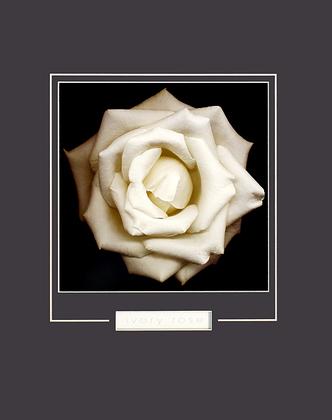 Harold Feinstein Ivory Rose