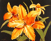 Steff Green 4er Set 'Sunshine Lilies' + 'Sunshine Daffodils' + 'Sunshine Roses' + 'Sunshine Primroses'