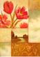 Raymes edward 2er set tulip dream poppy dream medium