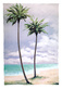 Goodwill margo beach palms ii medium