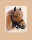 S. Poorter Portrait Pferd